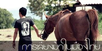 Horsemanual
